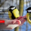 Фото: ecowiki.ru/winterbirds/